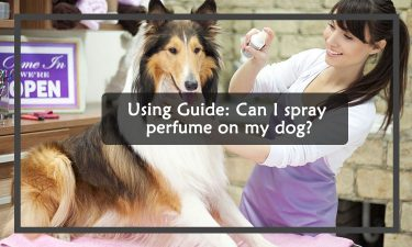 Can I spray perfume on my dog